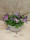 Pansy Planter from Beck's Flower Shop & Gardens, in Jackson, Michigan