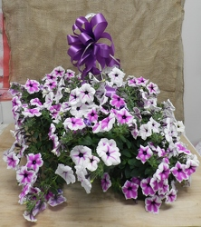 Petunia Hanging Basket from Beck's Flower Shop & Gardens, in Jackson, Michigan