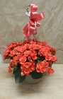 Rieger Begonia Hanging Basket from Beck's Flower Shop & Gardens, in Jackson, Michigan