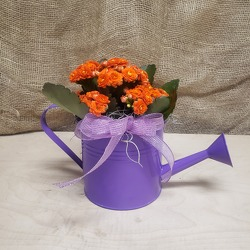 Watering Can with Blooming Plant from Beck's Flower Shop & Gardens, in Jackson, Michigan