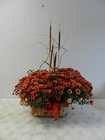 Double Mum Basket from Beck's Flower Shop & Gardens, in Jackson, Michigan