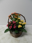 Kalanchoe Basket from Beck's Flower Shop & Gardens, in Jackson, Michigan