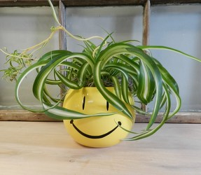Smiley Planter from Beck's Flower Shop & Gardens, in Jackson, Michigan
