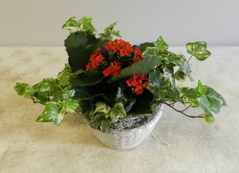 Sweet Kalanchoe  from Beck's Flower Shop & Gardens, in Jackson, Michigan