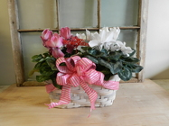 Double Cyclamen Basket from Beck's Flower Shop & Gardens, in Jackson, Michigan