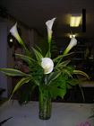 Simply Calla from Beck's Flower Shop & Gardens, in Jackson, Michigan