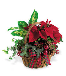 Holiday Planter Basket from Beck's Flower Shop & Gardens, in Jackson, Michigan