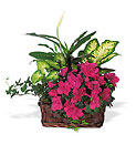 Azalea Attraction Garden Basket from Beck's Flower Shop & Gardens, in Jackson, Michigan