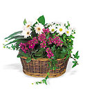 Traditional European Garden Basket from Beck's Flower Shop & Gardens, in Jackson, Michigan
