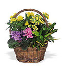 Petite European Basket from Beck's Flower Shop & Gardens, in Jackson, Michigan
