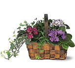 Mixed African Violet Basket from Beck's Flower Shop & Gardens, in Jackson, Michigan