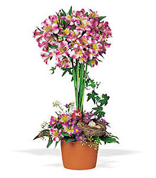 Alstroemeria Topiary from Beck's Flower Shop & Gardens, in Jackson, Michigan