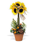 Sunflower Topiary from Beck's Flower Shop & Gardens, in Jackson, Michigan
